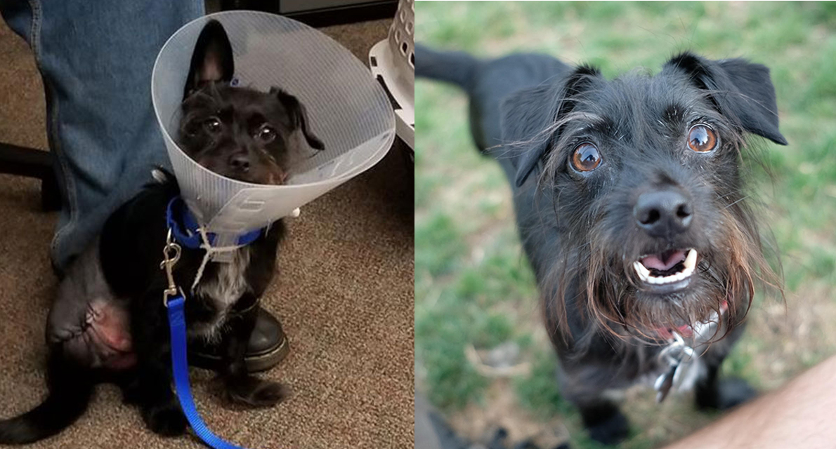 Asher, then and now